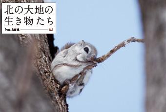 inoti66_kitano_top