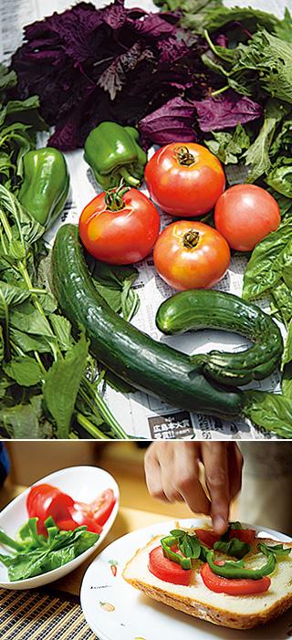 上:この日収穫した野菜の数々。「立派に育ってくれて、自然の生命力を感じます」/下:収穫したトマト、ピーマン、バジルを乗せて作るピザトースト