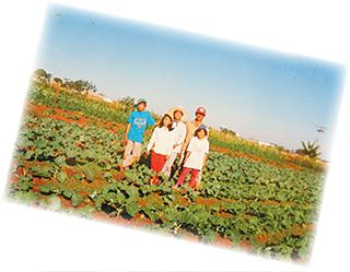 カツオさんたちは、ブラジルで他に先駆けて野菜作りを始めていた