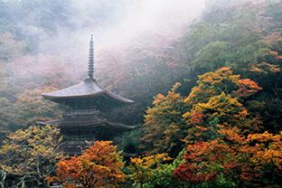渡邉さんの故郷、京都府舞鶴市にある古刹を撮った「金剛院の紅葉」