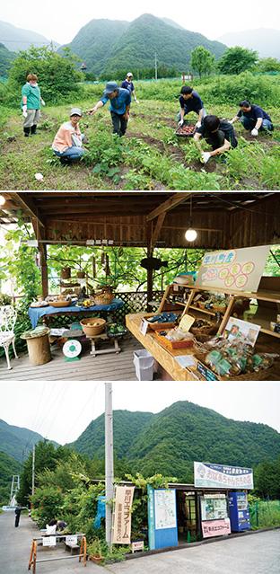 上:自分たちが手がけた畑で、ジャガイモの収穫をする大学生たち/中:早川エコファームでは、早川町産の無農薬野菜や民芸品の販売もしている/下:早川町の農産物や加工品を販売する「おばあちゃんたちの店」