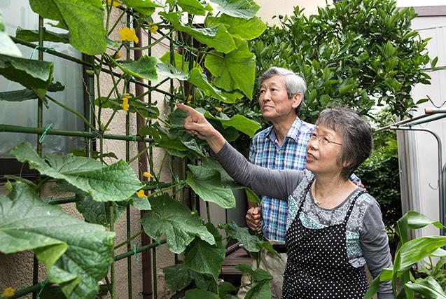 Kさん 75歳・千葉県 取材/南野ゆうり 撮影/野澤 廣 4坪ほどの家庭菜園の主役は、今年もキュウリ。夫の輝義さんと生育の様子を見る