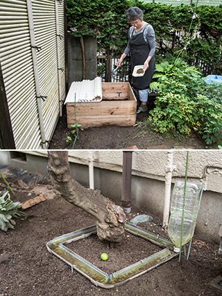 上:家庭菜園の隅に設置された腐葉土庫。フタはお風呂用のものを再利用。堆肥に生ごみを加えて畑の土をつくる/下:水を張った雨樋をネーブルの木の周囲に巡らせて、アリよけに。農薬を使わないための工夫である