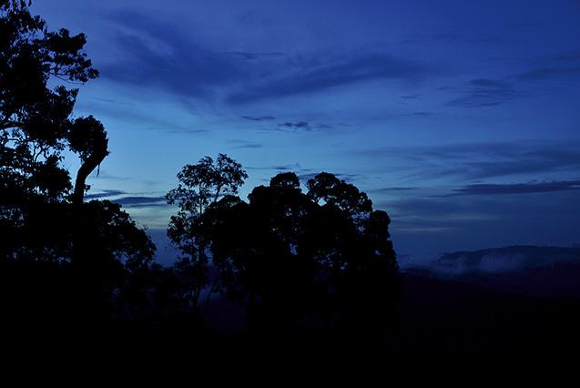 夕暮れ時の熱帯雨林。この後すぐ、生命の神秘を思わせる漆黒の闇に包まれる(倉橋さん提供)