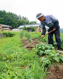 さわやかな高原の風に吹かれながら畑の手入れをする。無農薬でいろんな野菜を育てている