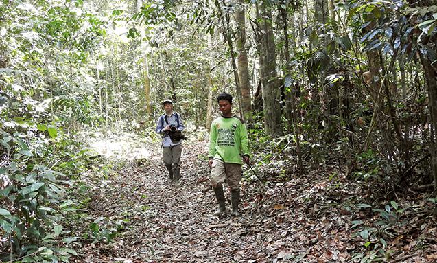 報告者:生長の家国際本部広報・クロスメディア部永井 暁(ながいあかつき)さん(生長の家本部講師補)写真/永井暁 国立公園に残存する多様性のある森には、大小さまざまな樹木が自生している。左が永井さん