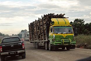 紙の原料になるアカシアの木を満載して走るトラック