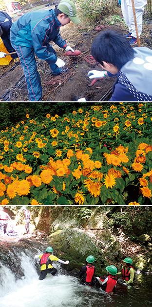 上:秋の実習では、立派に育ったサツマイモを収穫/中:村民と一般の参加者が協力して育てている小永田地区のひまわり/下:源流体験では、水しぶきを浴びながら川を上る