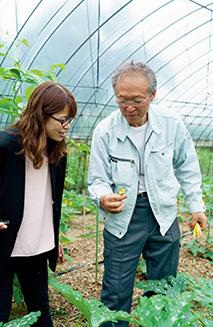 大きく葉を広げたズッキーニの花を手に取り、説明する吉田さん
