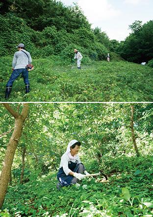 上:10年前に植林し、立派に生長したクヌギの森と、新しく植林した場所の中間部分も丁寧に下草を刈る/下:女性の参加者は、鎌を使って作業した