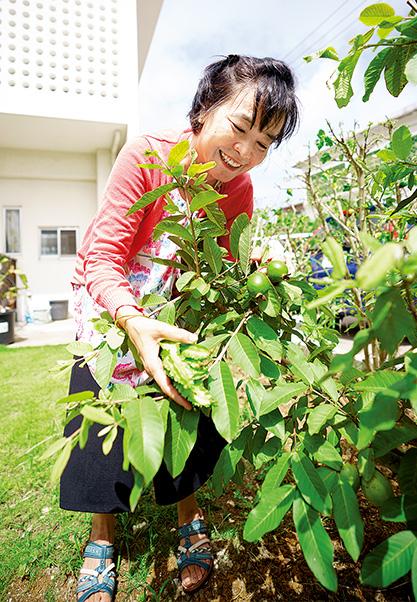 大城ミンミントウさん (63歳)沖縄県与那原町 自宅の庭で。グアバがたくさんの実をつけ、そろそろ収穫の時期を迎えていた。大城さんから笑みがこぼれる 取材/原口真吾(本誌) 撮影/堀 隆弘