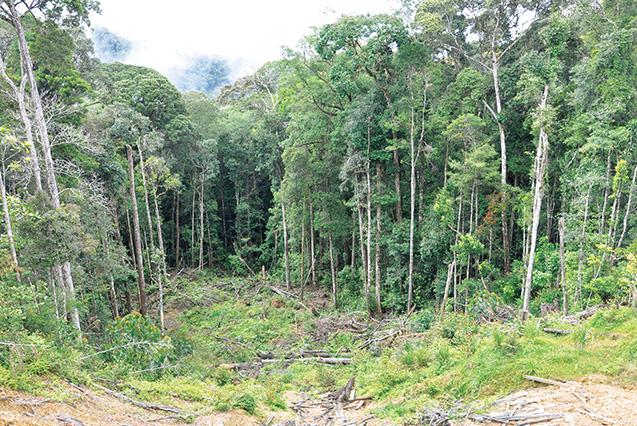 極相の状態にある熱帯雨林は、自然度が高く、清浄で安全な場所だという(倉橋さん提供)