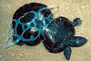 写真は、プラスチックフリージャパン提供