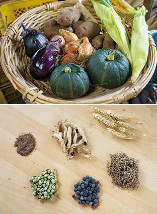 上:みずみずしいカボチャ、ナスなどの野菜。どれも野菜本来の味がすると評判だ/下:自家採種した種は、月の満ち欠けに合わせて蒔くという