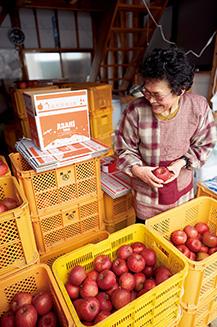 果樹園で収穫したリンゴを手に