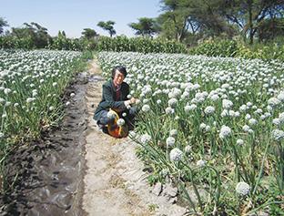 2014年、エチオピアにあるタマネギ採種を行う農家圃場を視察したときの西川さん(西川さん提供)