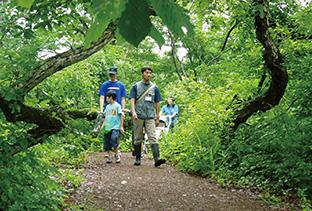 森の中を歩くと、視覚、嗅覚、触覚が刺激され、活性化する(長野県飯山市「母の森と神の森」写真提供=田中淳夫さん)