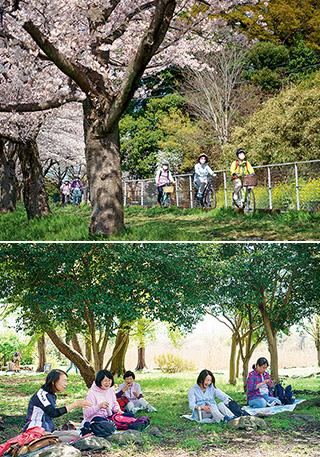 上:心地良い日差しと春風を感じながら桜回廊を走る/下:若葉の作る木陰で、そよ風と野鳥のさえずりに包まれながらのお弁当タイム。コロナ感染防止に配慮して並んで座り、昼食を摂った