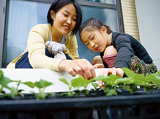 ベランダで野菜を種から育てている